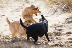 honden spelen